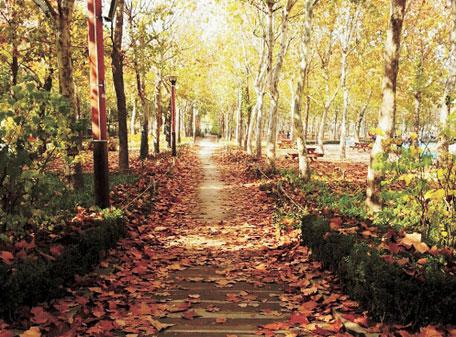 낙엽-01.jpg